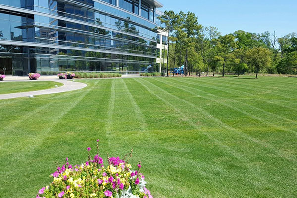 retail lawn maintenance services North York